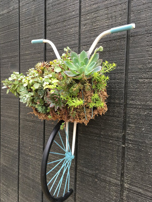 Sun May 02 Succulent bike
